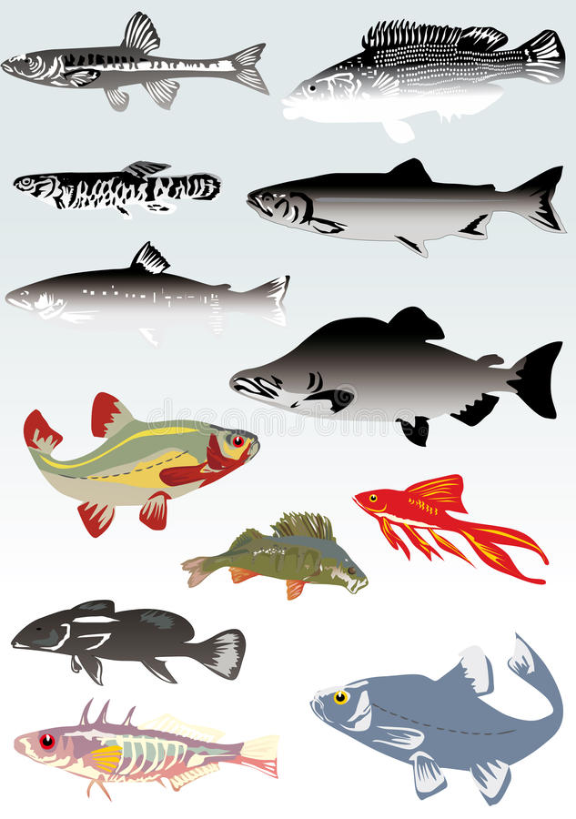 Conjunto de pescados en fondo ligero stock de ilustración