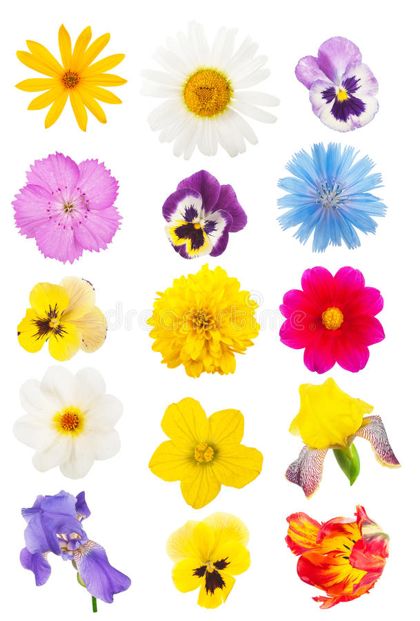 Conjunto de pistas de flor fotografía de archivo