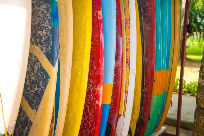 Conjunto de placas de surf de cores diferentes imagem de stock royalty free