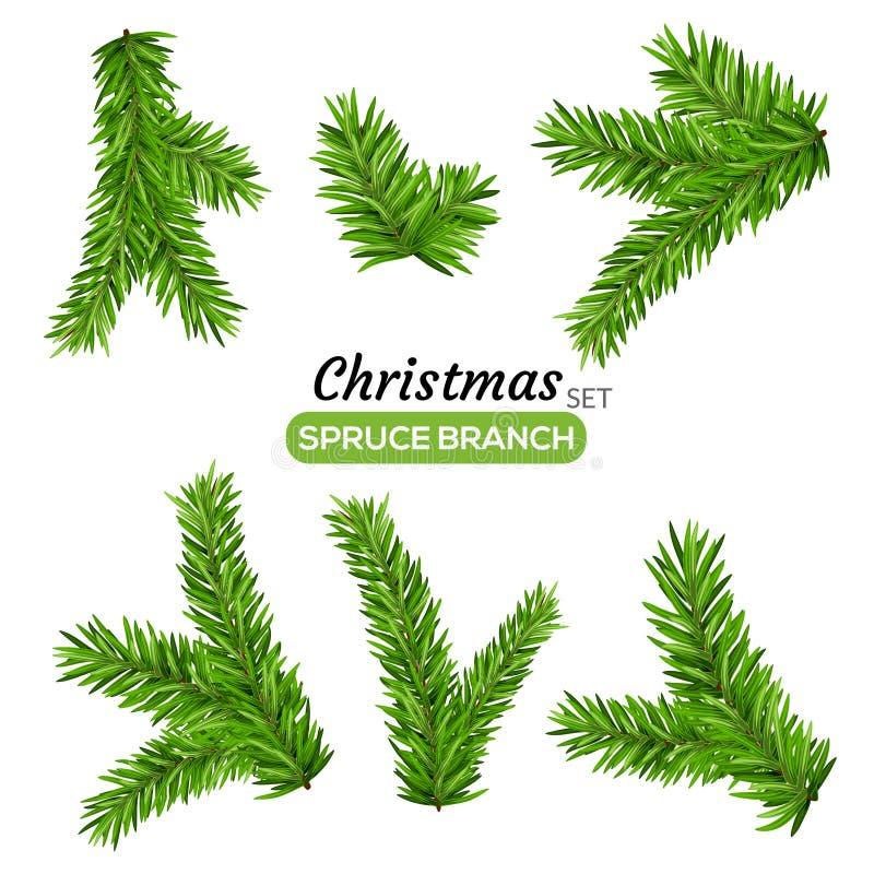Conjunto de ramificaciones del abeto Ejemplo del árbol de hoja perenne del vector de la rama del árbol de navidad o del pino Deco libre illustration