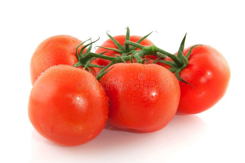 Conjunto de tomates frescos fotos de stock royalty free