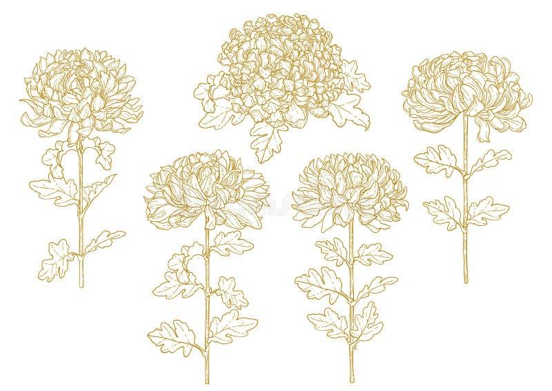Conjunto del crisantemo contorneado uno-coloreado stock de ilustración