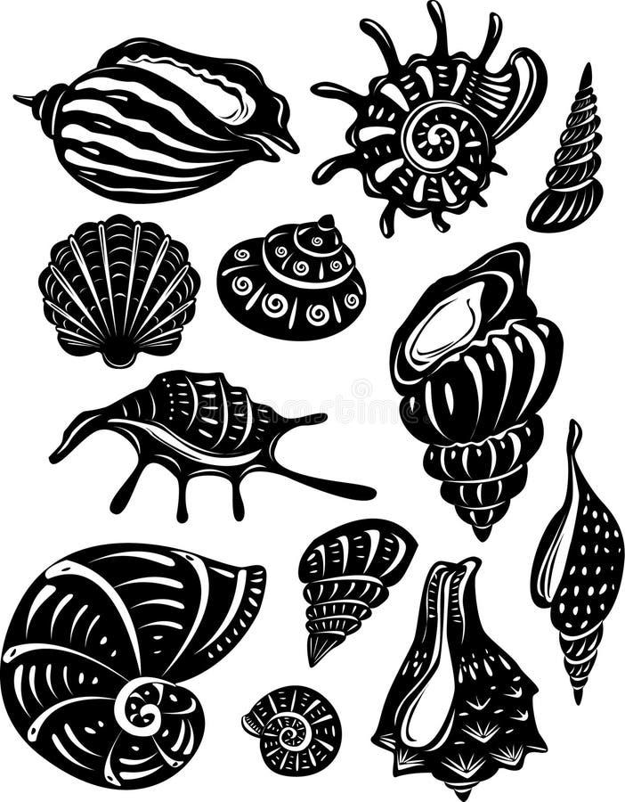 Conjunto del shell decorativo ilustración del vector