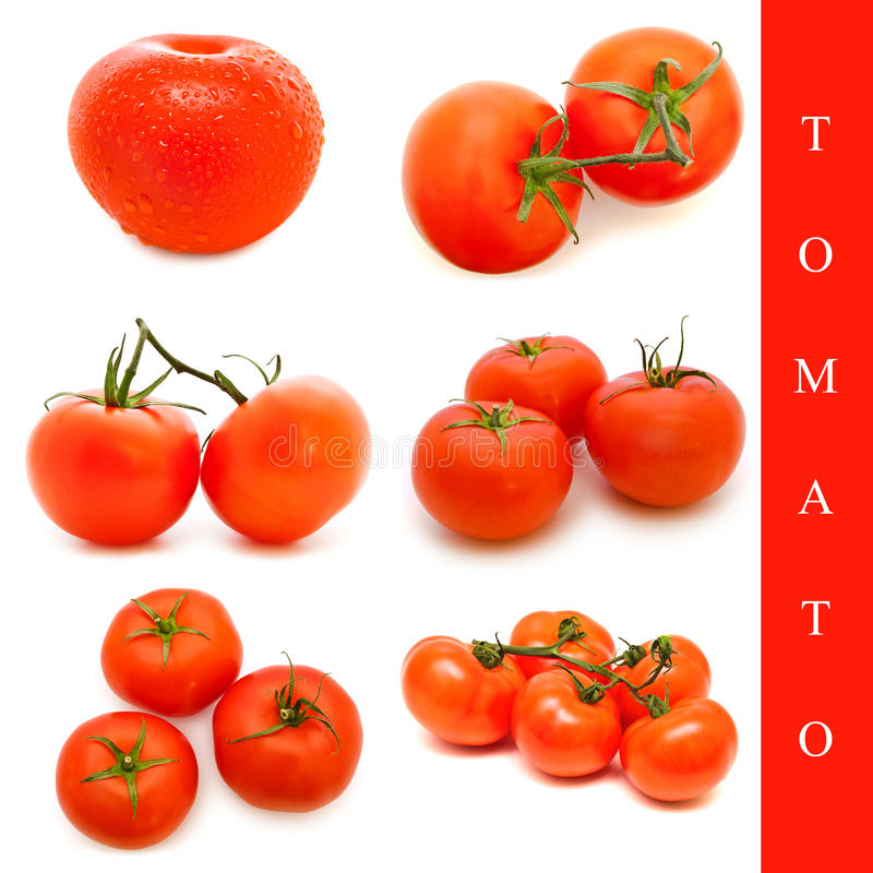 Conjunto del tomate fotografía de archivo