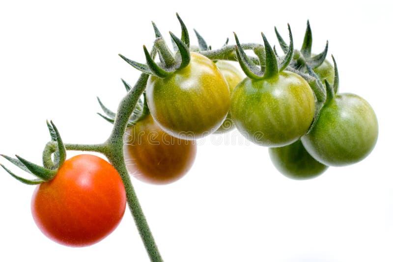 Conjunto do tomate de cereja no branco fotos de stock royalty free