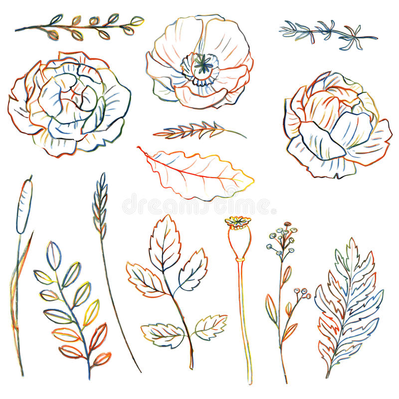 Conjunto floral ilustración del vector