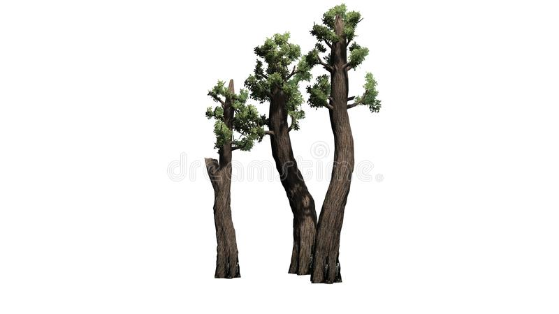 Conjunto gigante da árvore da sequoia vermelha ilustração royalty free