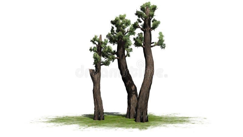 Conjunto gigante da árvore da sequoia vermelha ilustração stock