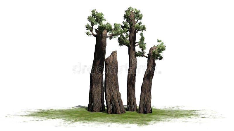 Conjunto gigante da árvore da sequoia vermelha ilustração do vetor