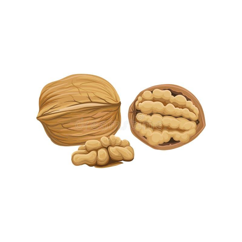 Conjunto, mitad y pedazo pelado de nuez Icono de la nuez de la historieta Bocado orgánico cocinar el ingrediente Elemento del dis ilustración del vector