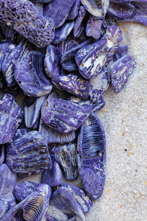 Conjunto roxo da concha do mar na areia imagens de stock royalty free