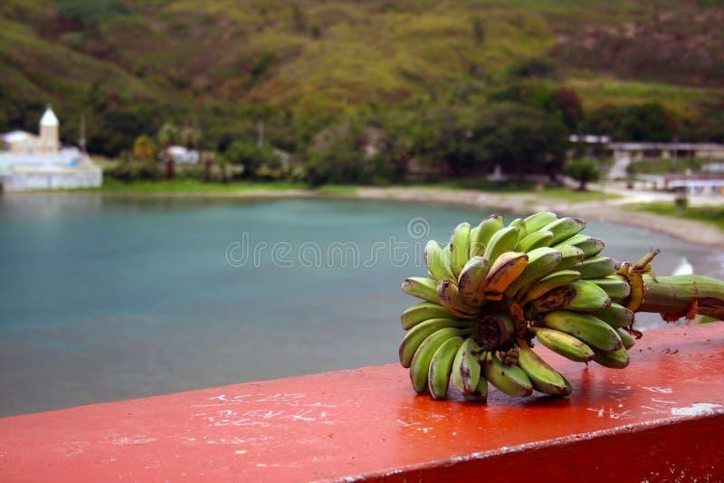 Conjunto selvagem da banana foto de stock royalty free
