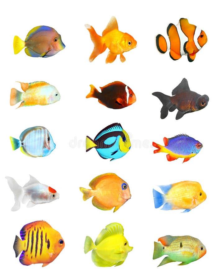Conjunto tropical de los pescados. imagen de archivo libre de regalías