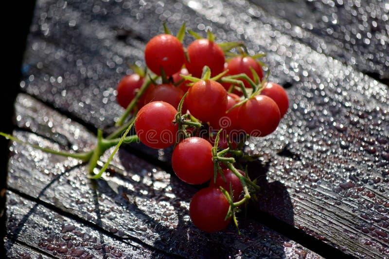 Conjunto vermelho do tomate de cereja fotografia de stock