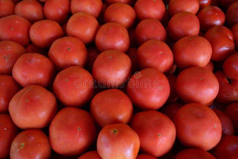 Conjunto vermelho do tomate no fruto vegetal do escaninho fotos de stock