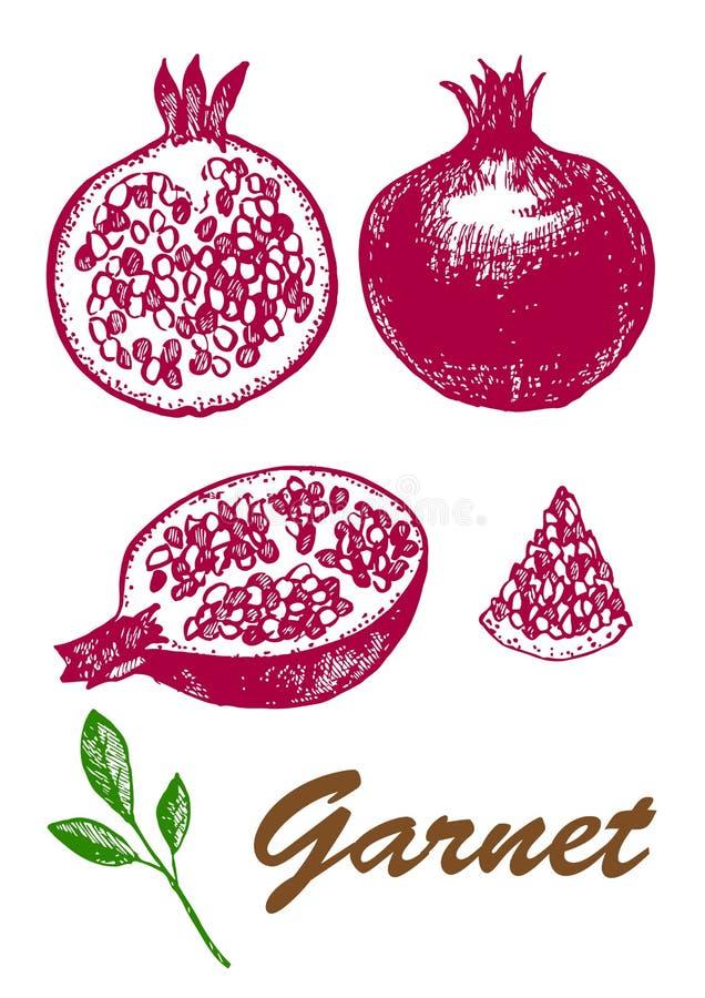 Conjunto y medio granate con la semilla Comida vegetariana Ejemplo bot?nico de la comida imágenes de archivo libres de regalías
