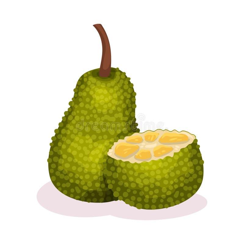 Conjunto y mitad del jackfruit Fruta tropical jugosa Alimento exótico Nutrición vegetariana Diseño plano detallado del vector stock de ilustración