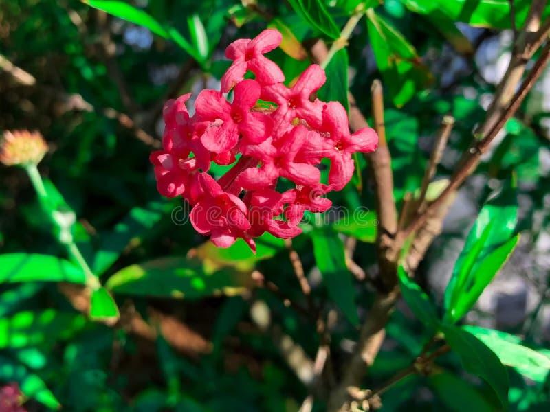 conjuntos de flor cor-de-rosa tropicais fotos de stock