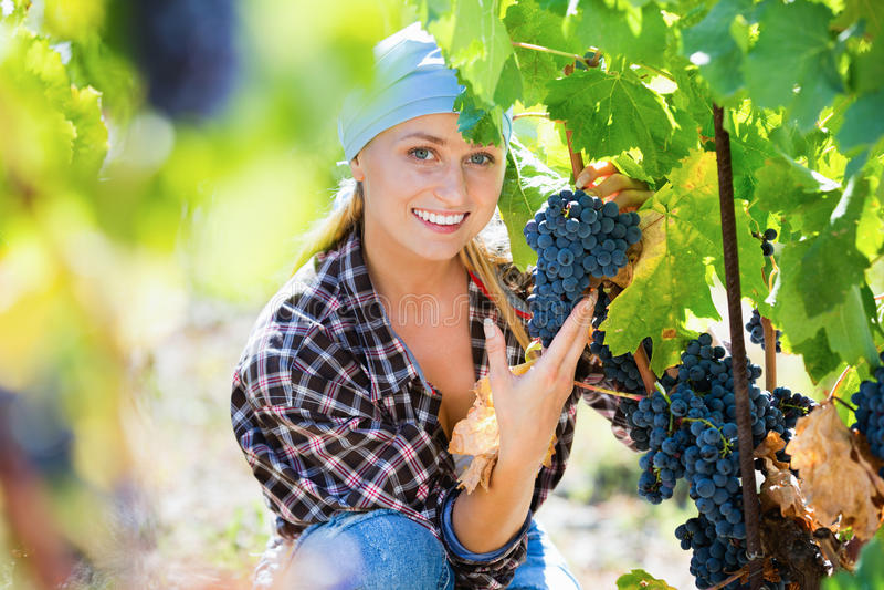 Conjuntos do corte do pessoal fêmea de uva para vinho foto de stock royalty free