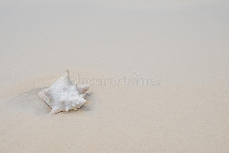 Conk skorupa na białej piasek plaży - odbitkowy tempo obraz stock