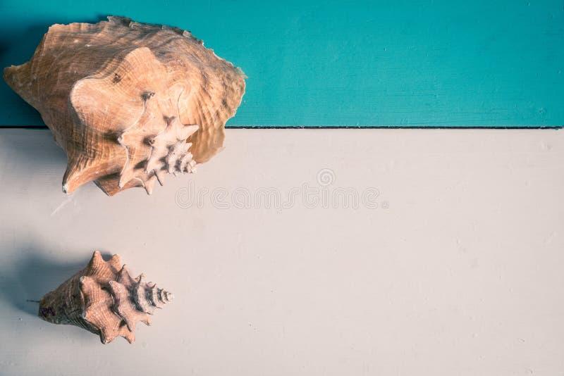 Conk skorupy na drewnianej tło kopii przestrzeni - łuska dekorację zdjęcie stock