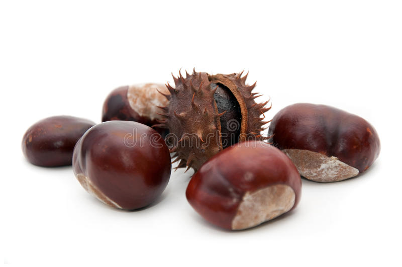 Download Conker stock image. Image of autumn, horse, buckeye, nature - 16241269