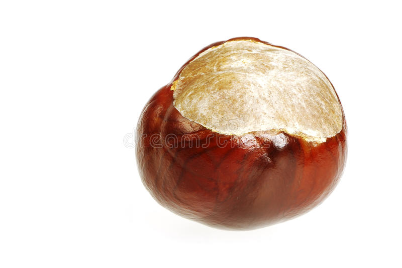 Download Conker stock image. Image of chestnut, autumn, fall, single - 28619023