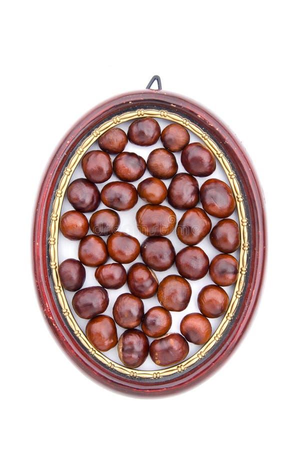 Conker bär frukt frö i den isolerade ovala ramen för träbilden royaltyfri bild