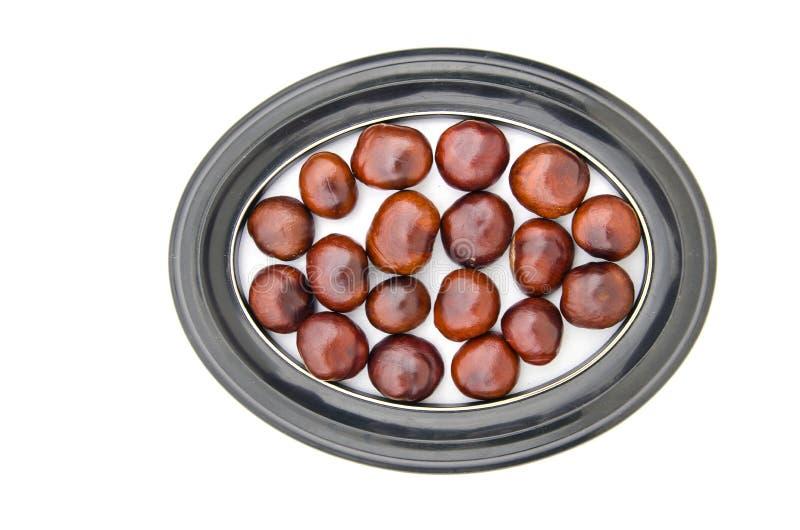 Conker bär frukt fröchesnuts i den isolerade ovala ramen för bilden royaltyfria bilder