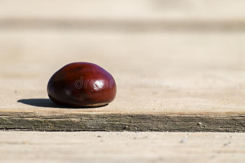 Conker from a horse-chestnut on a wooden table stock image
