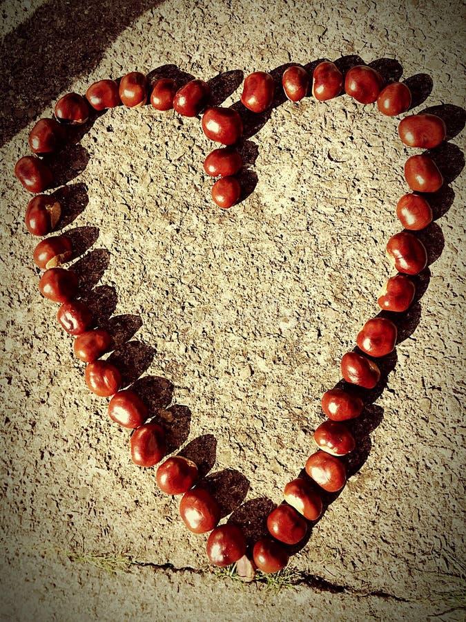 Conker miłość zdjęcie royalty free