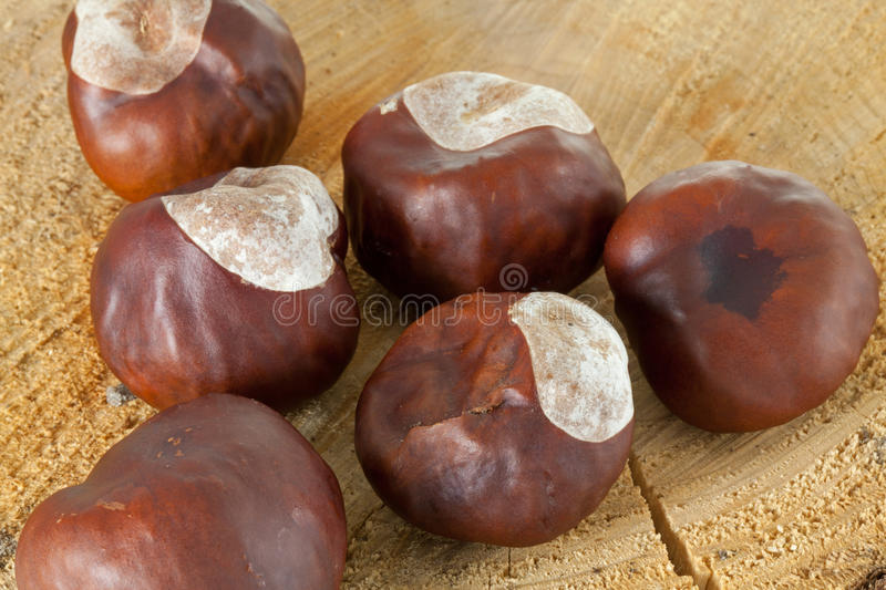 Download Conkers Stock Photo - Image: 21707580