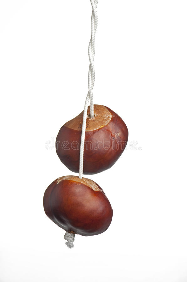 Conkers on string. Two conkers on twisted string royalty free stock image