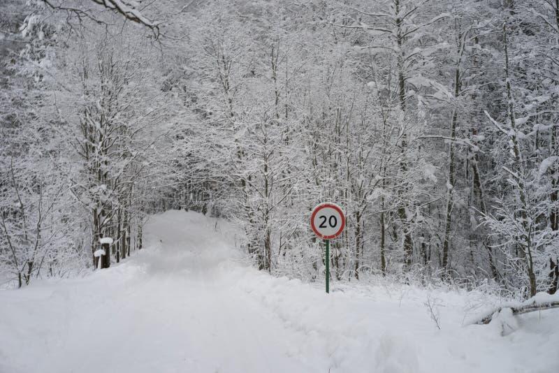 Connexion du trafic la forêt complètement de neige photo libre de droits