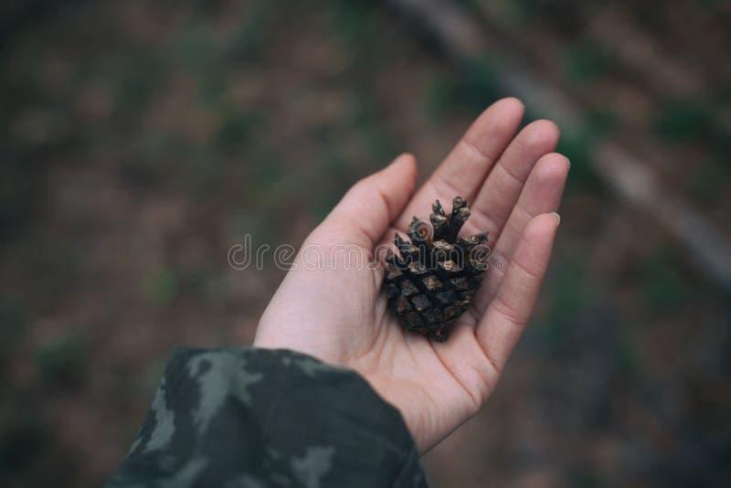 Cono de abeto en la palma en el bosque fotos de archivo libres de regalías