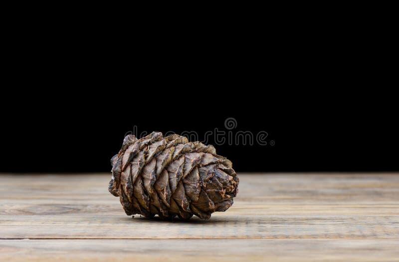 Cono del cedro di Taiga su una tavola di legno immagine stock libera da diritti