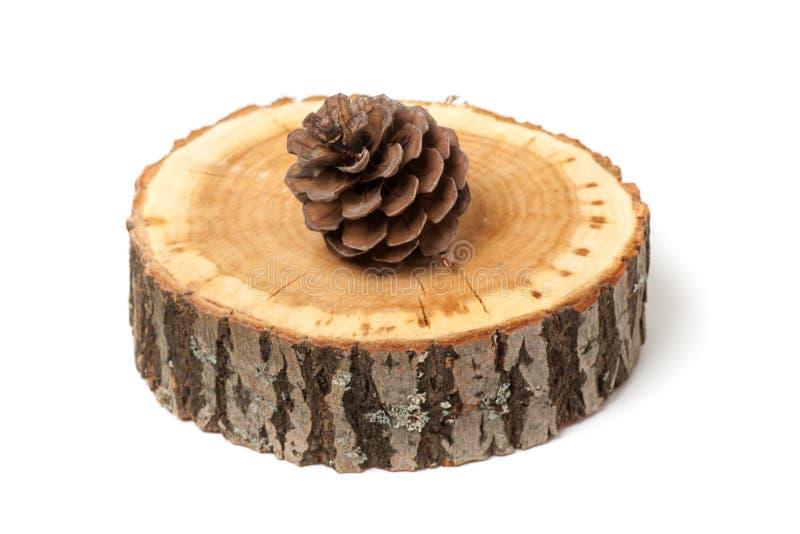 Cono del cedro en la rebanada de madera, imagenes de archivo