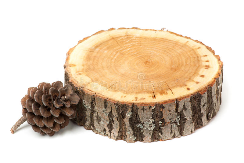 Cono del cedro y rebanada de madera, aislada imagen de archivo libre de regalías