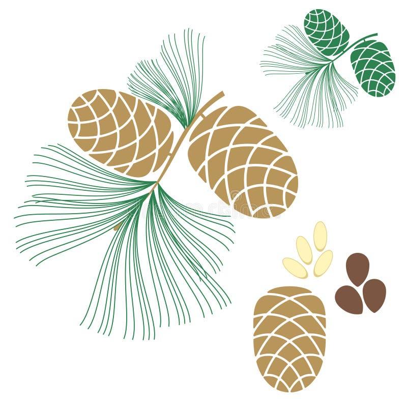 Cono del pino. Árbol de cedro stock de ilustración