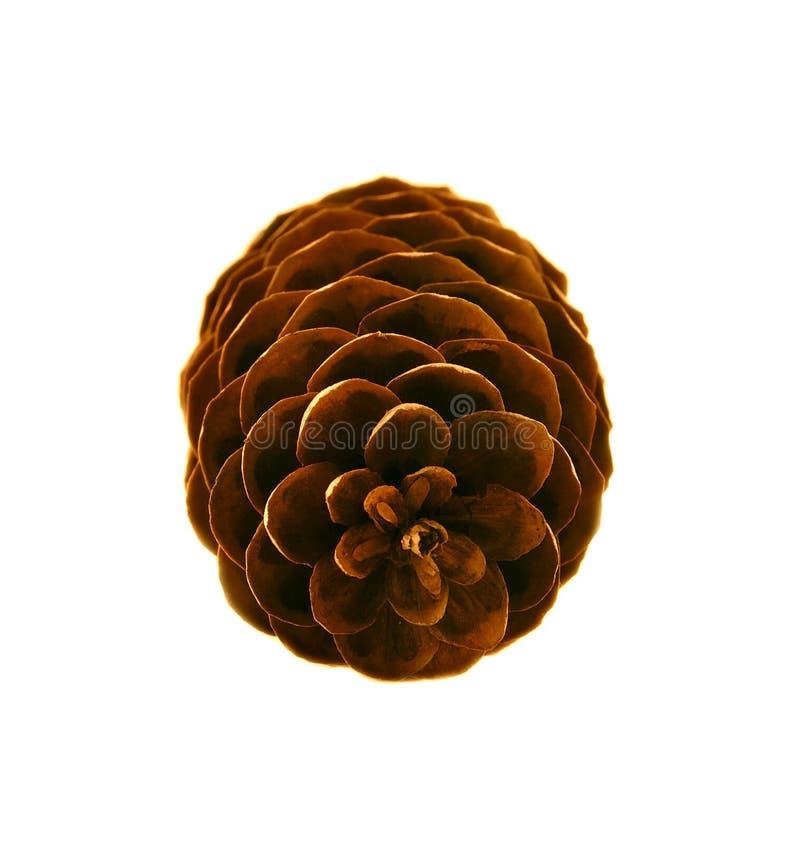 Download Cono del pino imagen de archivo. Imagen de seco, germen - 7276141