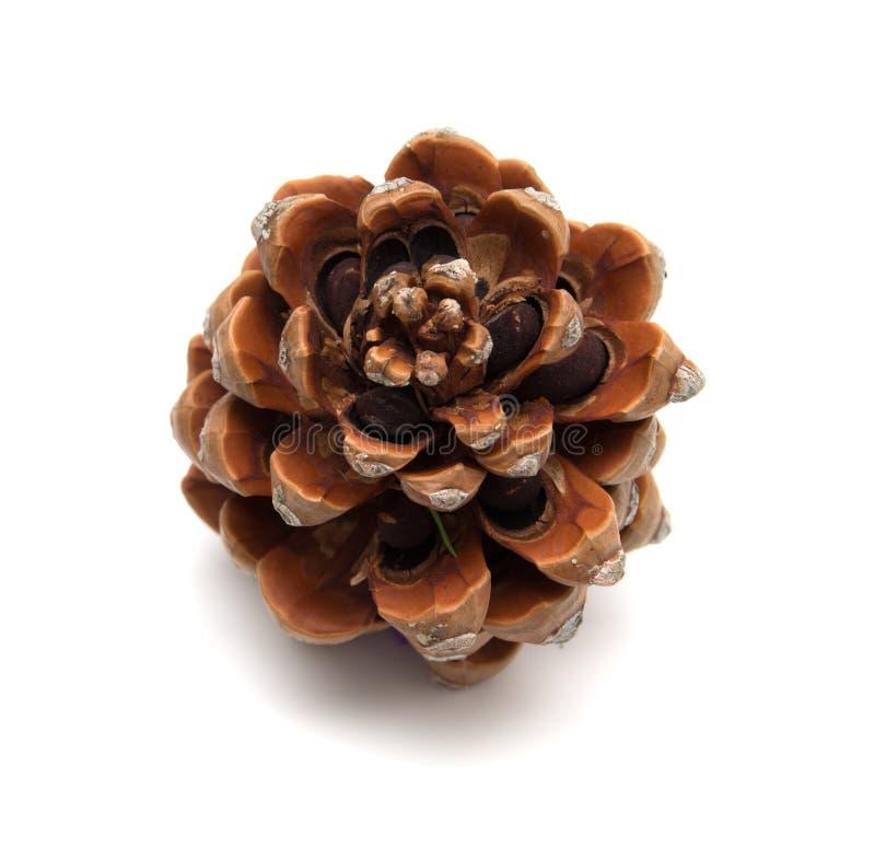 Cono del pino de piedra, Pinus Pinea imagenes de archivo