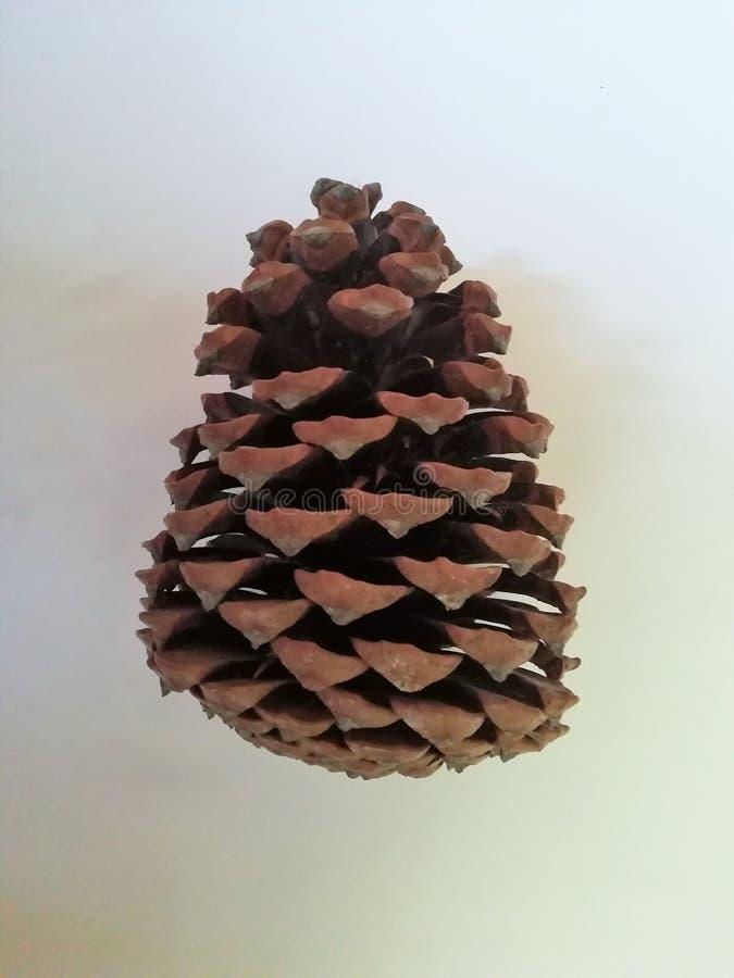 Cono del pino en el fondo blanco imágenes de archivo libres de regalías