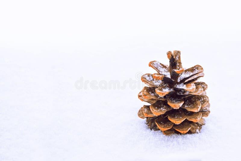 Cono del pino en la nieve imagen de archivo