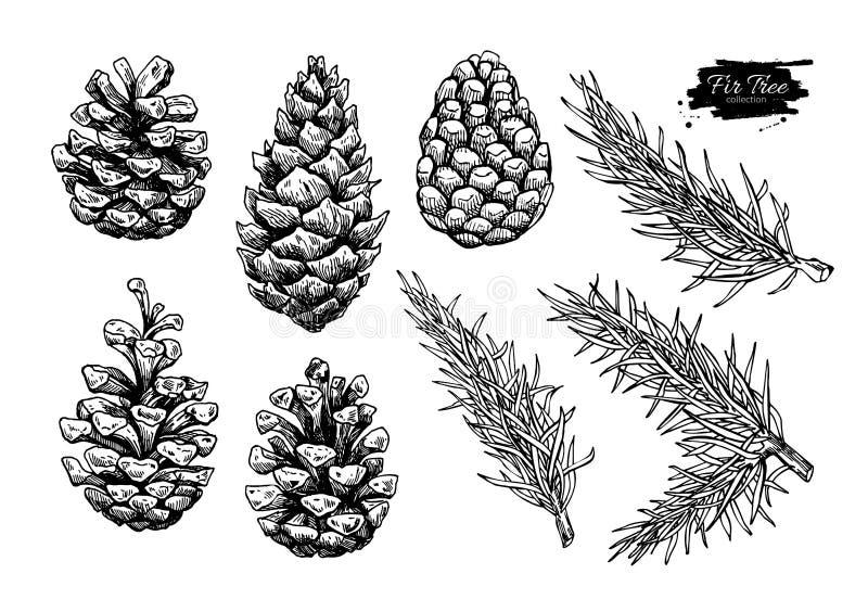 Cono del pino y sistema del árbol de abeto Vector dibujado mano botánica stock de ilustración