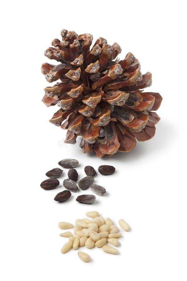Cono e semi del pino gentile fotografia stock libera da diritti
