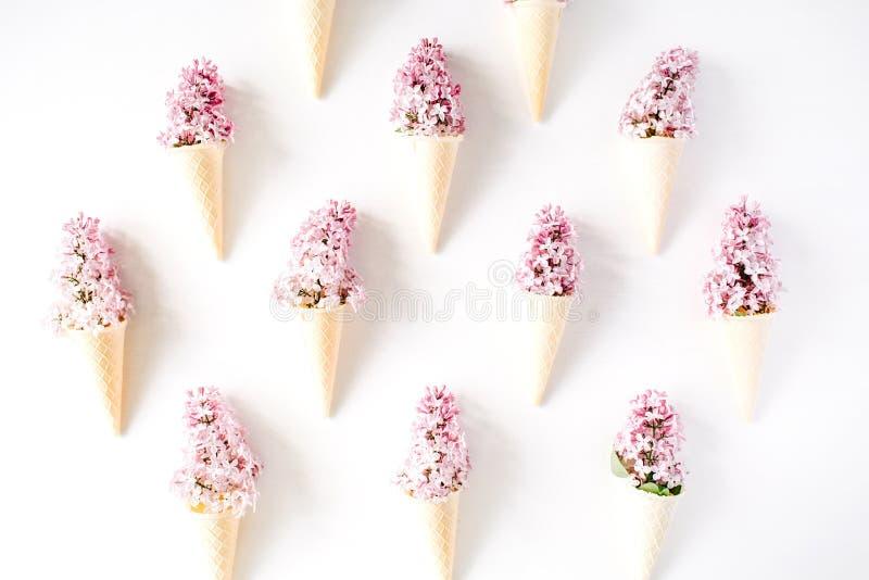 Conos con la lila en el fondo blanco fotografía de archivo libre de regalías