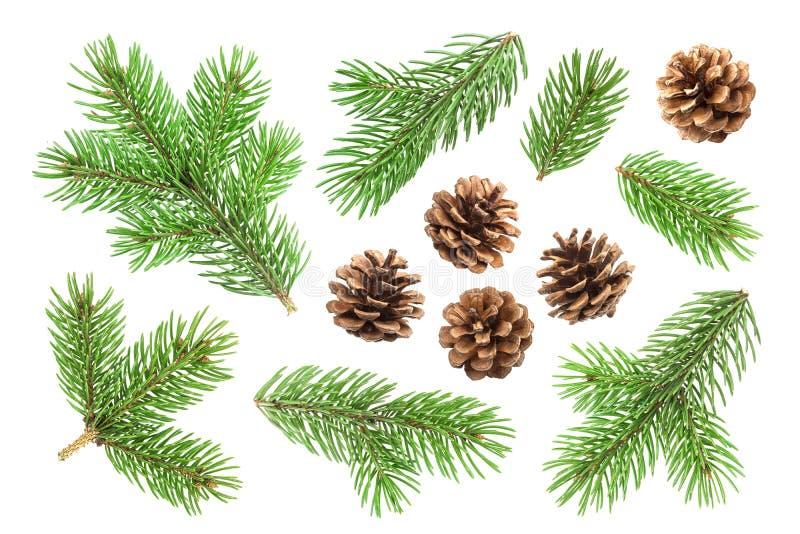 Conos de la rama y del pino de árbol de abeto aislados en el fondo blanco imagenes de archivo