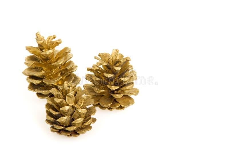 Conos de oro del pino fotos de archivo libres de regalías