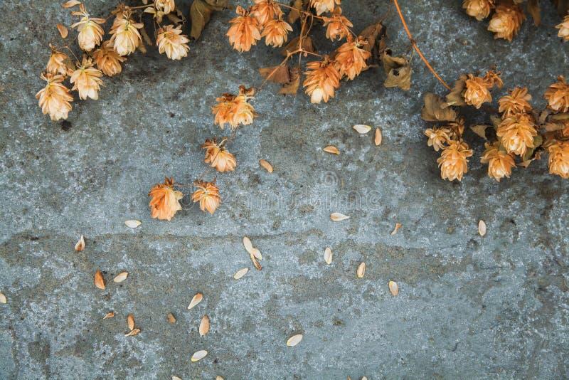 Conos de salto marrones secos en fondo concreto brewing Ingre de la cerveza fotografía de archivo libre de regalías