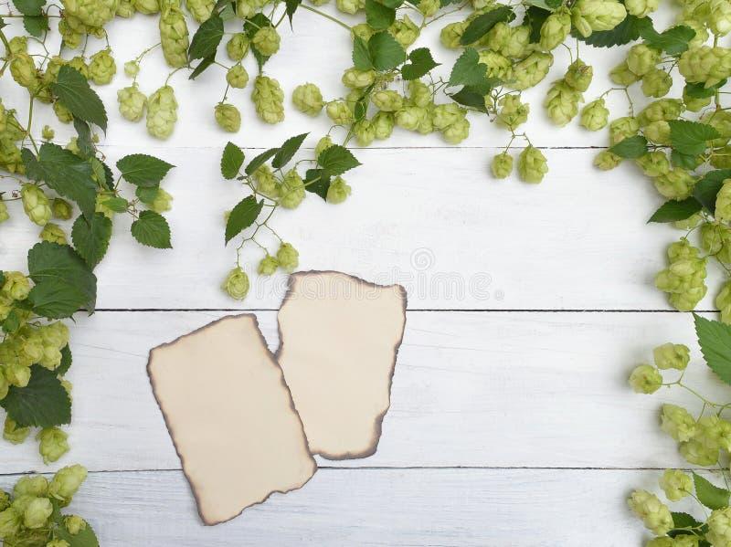 Conos de salto verdes frescos con las hojas Papel viejo Ingredientes fotos de archivo